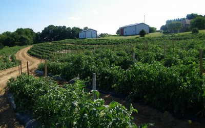 wholesale produce in Maryland, Community Supported agriculture, road-side stand, farmers markets, local farming, frozen vegetables, beef, Hereford Cattle