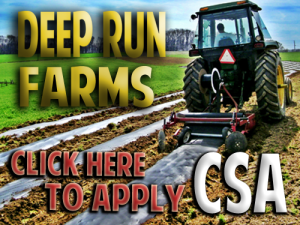 csa listings, consumer supported agriculture, pumpkin farming, csa listing, community sponsored agriculture, csa vegetables, wholesale produce prices, maryland csa