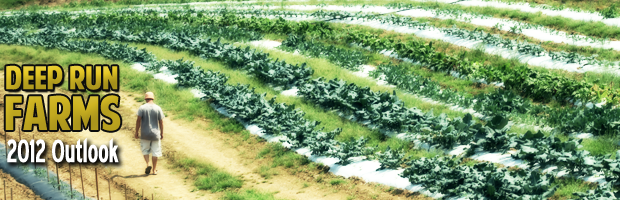 wholesale vegetable prices, wholesale fruit and veg prices, wholesale fruit and vegetable prices, wholesale fruit prices, wholesale produce prices
