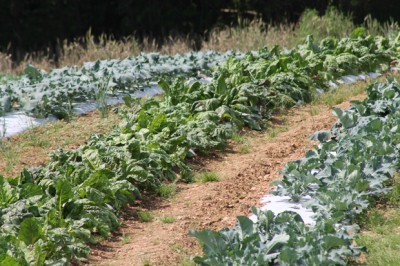 Wholesale Produce Maryland, produce market Hampstead MD, produce market Carroll County, produce market Maryland, produce market Baltimore MD, produce market Westminster MD, New Windsor MD, Sykesville MD, Taneytown MD, Frederick MD, Hanover PA