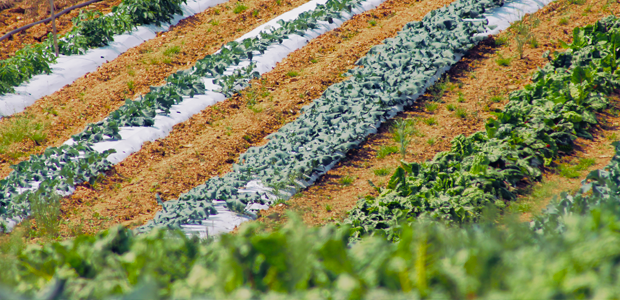 Wholesale Produce Maryland, wholesale produce carroll county, fruit and vegetable farming, fruit and vegetable market, fruit and vegetable stand local beef, local farm markets, local farm shop, local farm shops, local farming